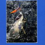 La pesca marítima de recreo en Andalucía | Consejería de Agricultura y Pesca | jun 2008